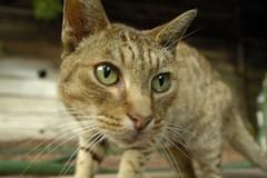 Stray Cat II