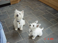 Shuggie and Molly playing
