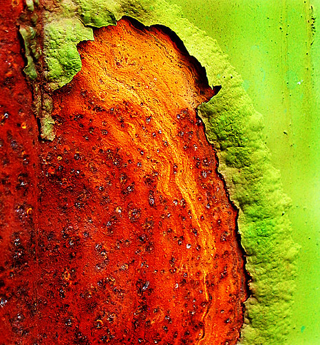 Peeling Paint by scottwills