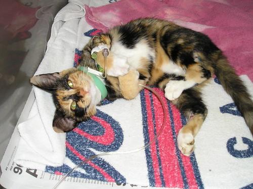 Miracle Kitten