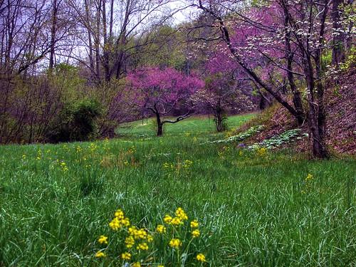 Daydreams in a Meadow