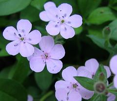 2007-05-28 007_crop