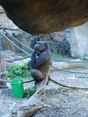 Taronga Zoo (29)