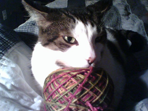 Yarn is so soft it's a cat pillow