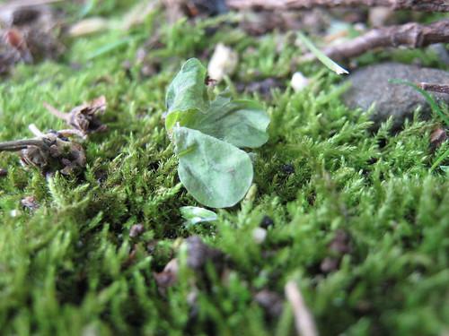 Backyard moss, 1