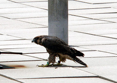 Beth Stalks Around