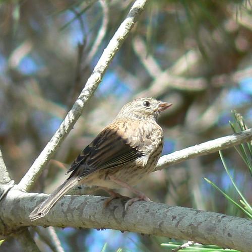 Unknown bird???
