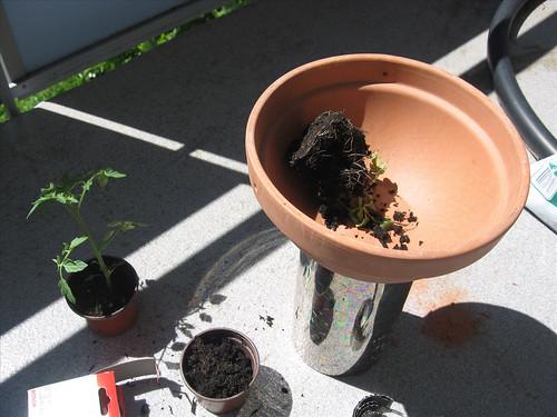 mehr gr n projekt no 2 upsidedowntomatos wachsen tomaten auch nach unten peter pan s. Black Bedroom Furniture Sets. Home Design Ideas