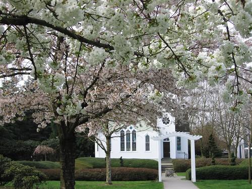 Spring in Minoru Park, Canada