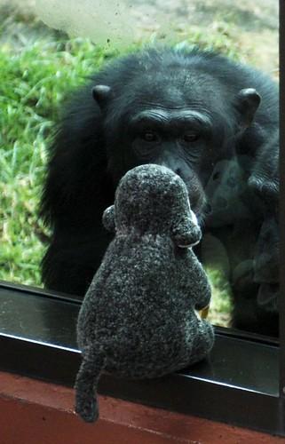 que monos?