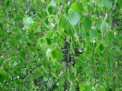 feuilles sous la pluie