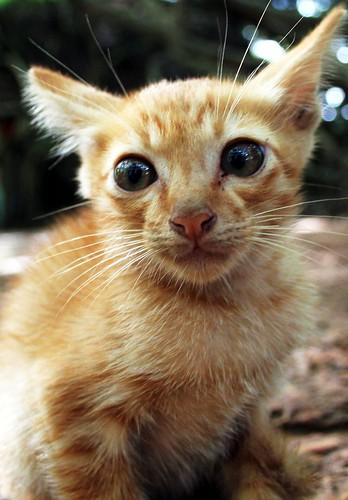 A scared kitten