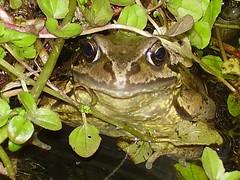 Frog (500px Blog Entry Edit)