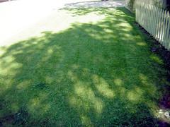 lawn in August2