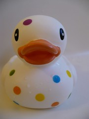 Polka dot rubber duckie