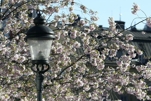 Japan i Stockholm