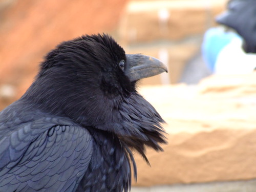 Nevermore that look