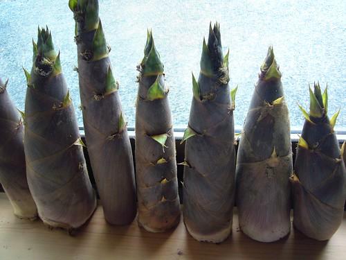 freshly dug bamboo shoots on Flickr - Photo Sharing!