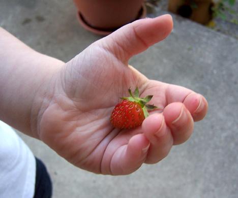 Kam's Berry