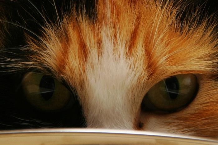 Feline eyes stare at me