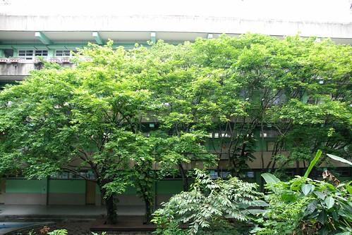 新興國�-楓樹