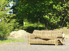 Feral couch, Keene, NH