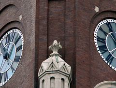 Peregrine Falcon on St. Michael's Church