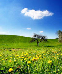 Lonely Tree with Cloud and Dandelions by aremac