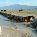 "Horses <a style=""margin-left:10px; font-size:0.8em;"" href=""http://www.flickr.com/photos/36521966868@N01/24265574/"" target=""_blank"">@flickr</a>"