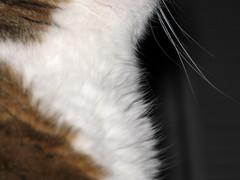 cat neck