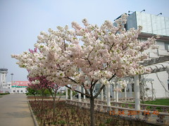 Airport Blossoms 2