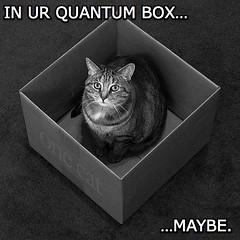 IN UR QUANTUM BOX - MAYBE