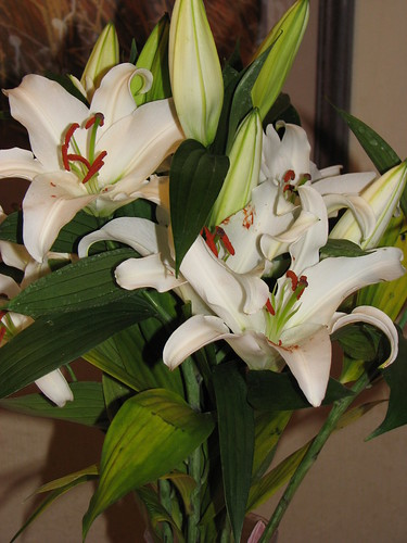 Lillies from Hubby 1