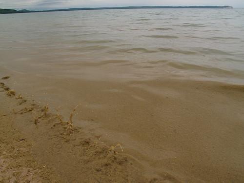 Ploink! goes the Lake Michigan algae