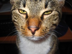 Kinezumis. Mano katinas