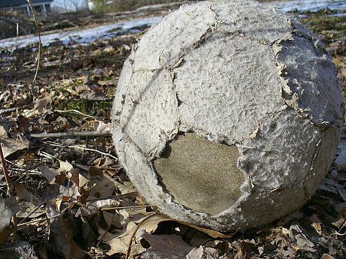 Soccer artifact