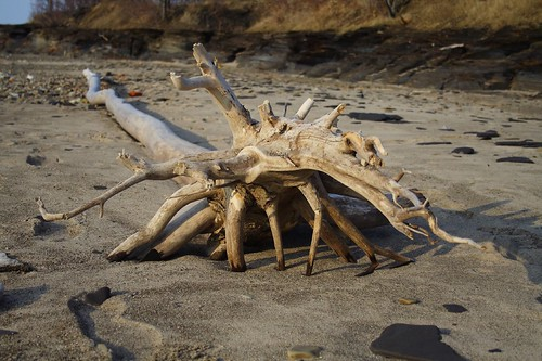 Driftwood Sculpture 3