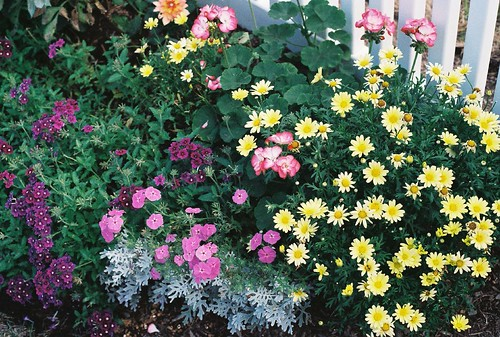 mixed flowers.