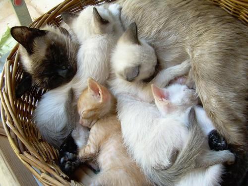 Panera / truita / gats