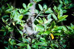 monkeys-1011