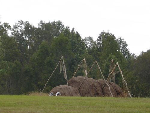 Spider at Jim Bird's Hay Creations, Forkland AL