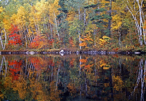 Monet paints the forest for fall