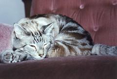 Scan10038 Sage sleeping