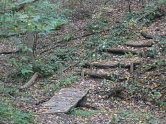 Steps through the forest