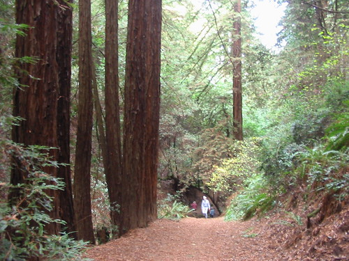 French Trail, Redwood Regional Park