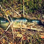 """Empty bottle. #glas #sommar #sol #landet #nyckelbygatan #nyckelby #fellingsbro #nasommar #sweden #sverige #summer #sun #glass #bottle #visitsweden <a style=""""margin-left:10px; font-size:0.8em;"""" href=""""http://www.flickr.com/photos/131645797@N05/19945919421/"""" target=""""_blank"""">@flickr</a>"""