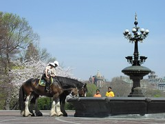Horses drinking from a fountain in Central Park