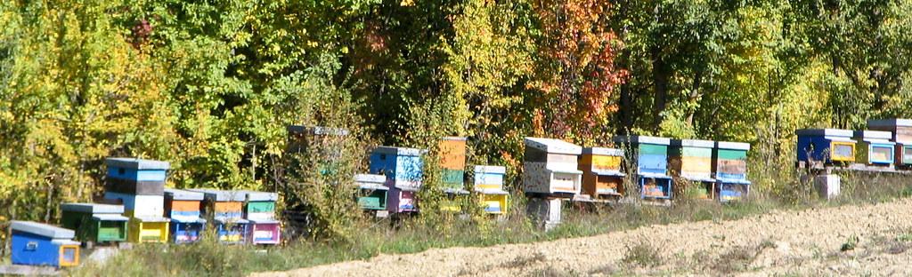 photo d'un rucher en Italie
