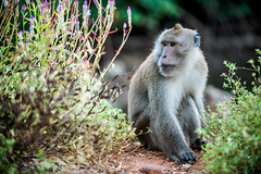 monkeys-1004