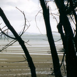 """Tas Tides From Trees <a style=""""margin-left:10px; font-size:0.8em;"""" href=""""http://www.flickr.com/photos/36521966868@N01/4036213/"""" target=""""_blank"""">@flickr</a>"""